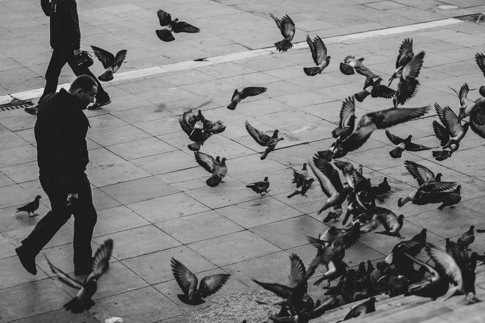 pigeons take off as pedestrians cross a square