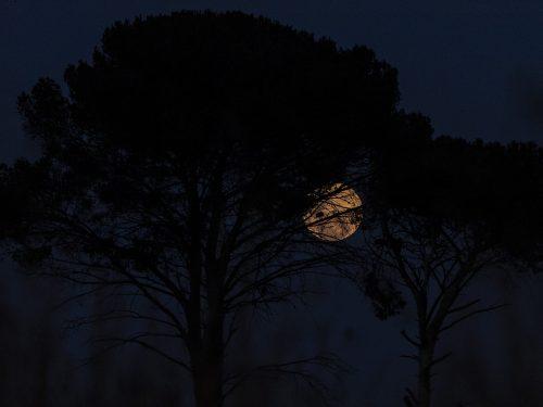 full moon Johannesburg South Africa.