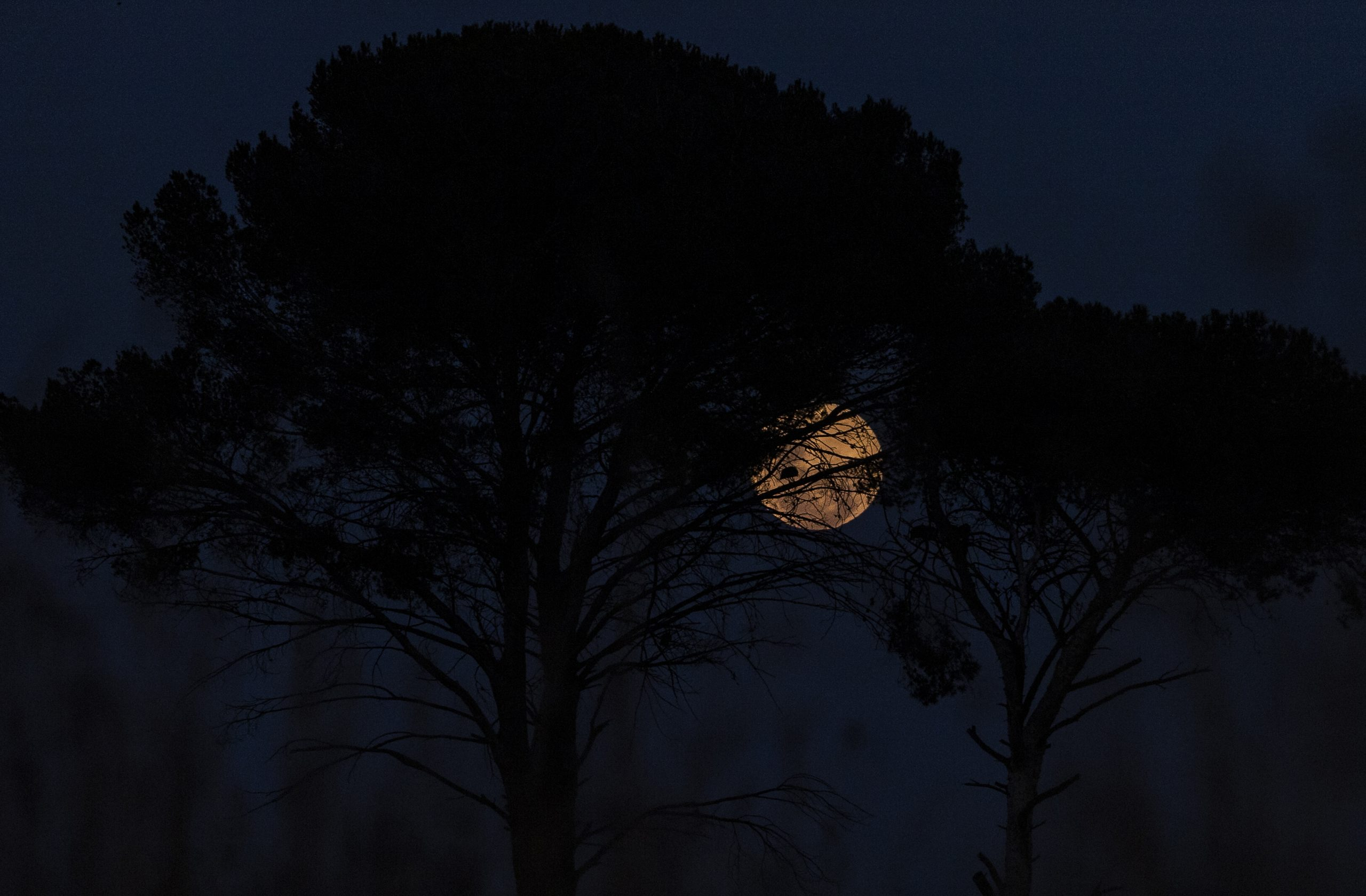 full moon Johannesburg South Africa.